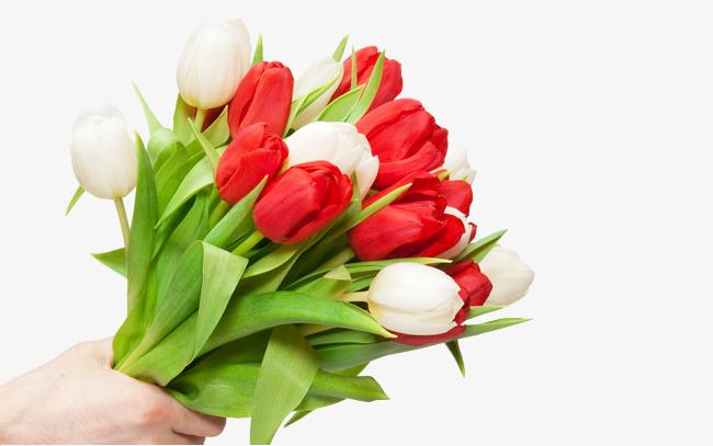 hoa tulip bieu tuong tinh yeu